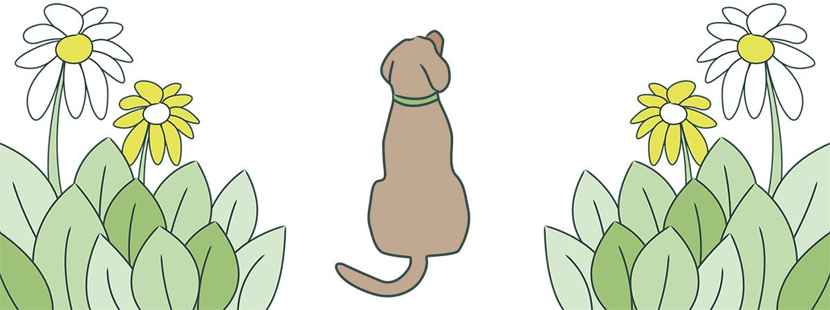 Dog Hair Day banner with dog