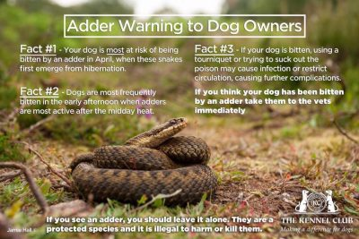 The Kennel Club have produced this great graphic on what to do if you think your dog has been bitten.