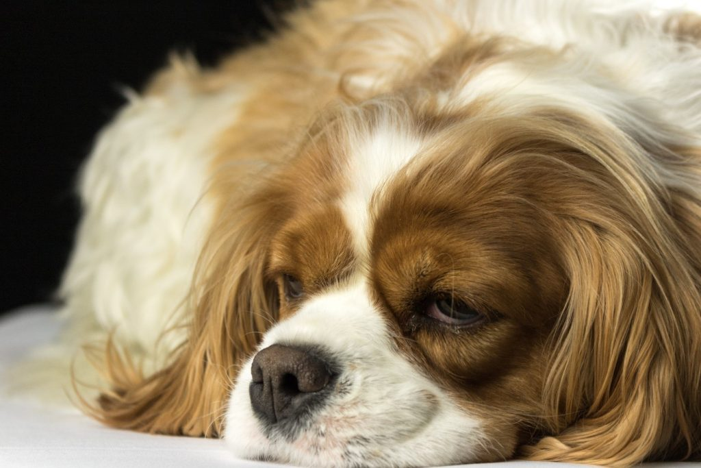Changes in sleep patterns may indicate a depressed dog