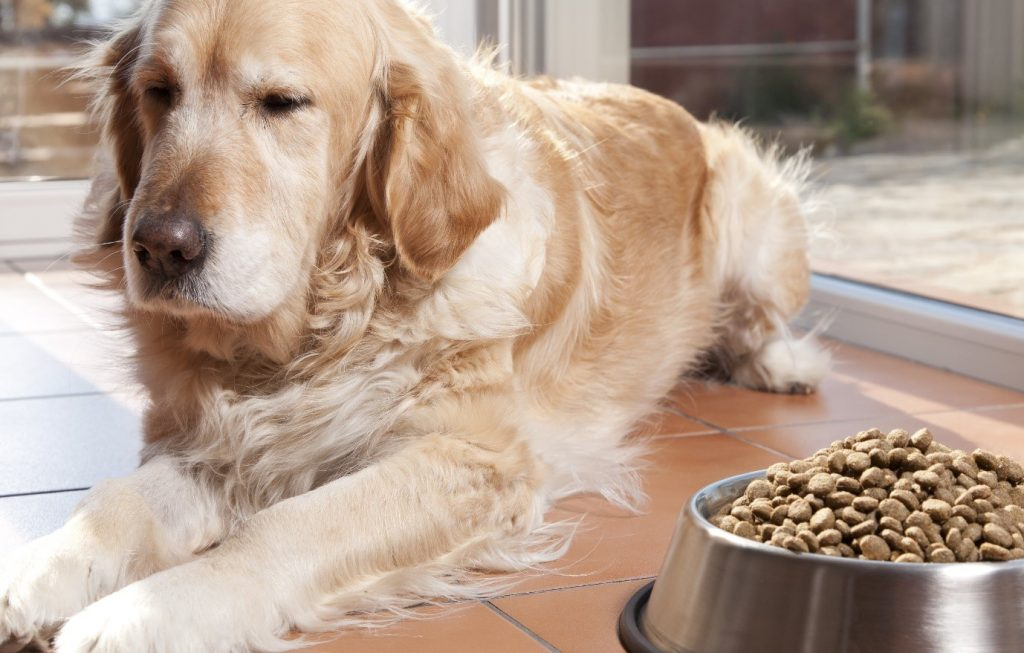 Appetite changes may indicate a depressed dog