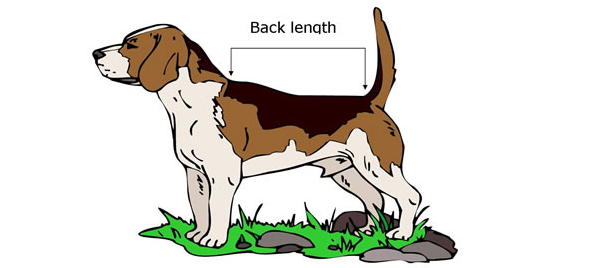 dog measuring guide