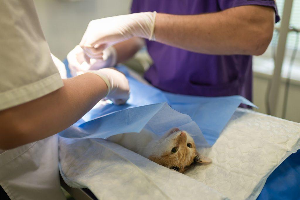 Veterinary nursing in surgery